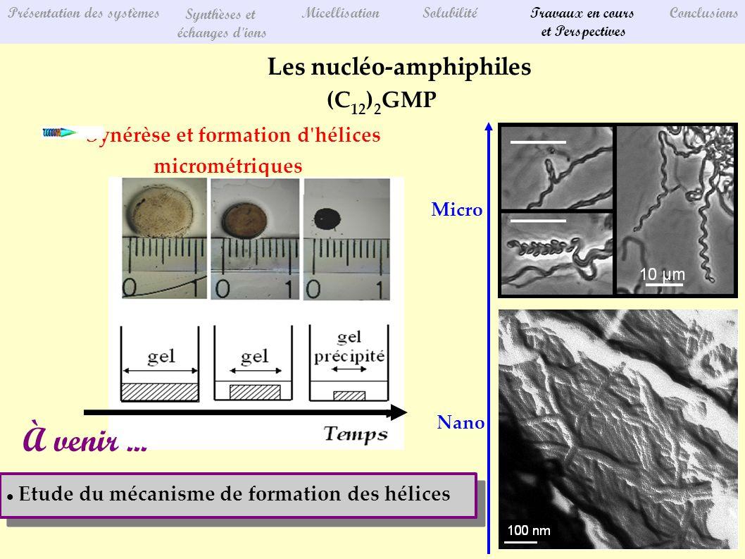 Présentation des systèmes Synthèses et échanges d ions MicellisationSolubilitéTravaux en cours et Perspectives Conclusions Les nucléo-amphiphiles (C 12 ) 2 GMP Synérèse et formation d hélices micrométriques Nano Micro Etude du mécanisme de formation des hélices À venir...