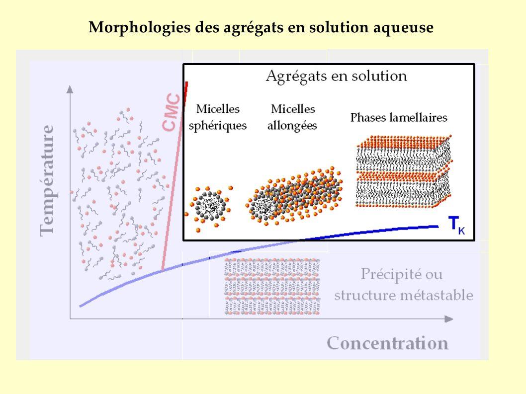 Morphologies des agrégats en solution aqueuse