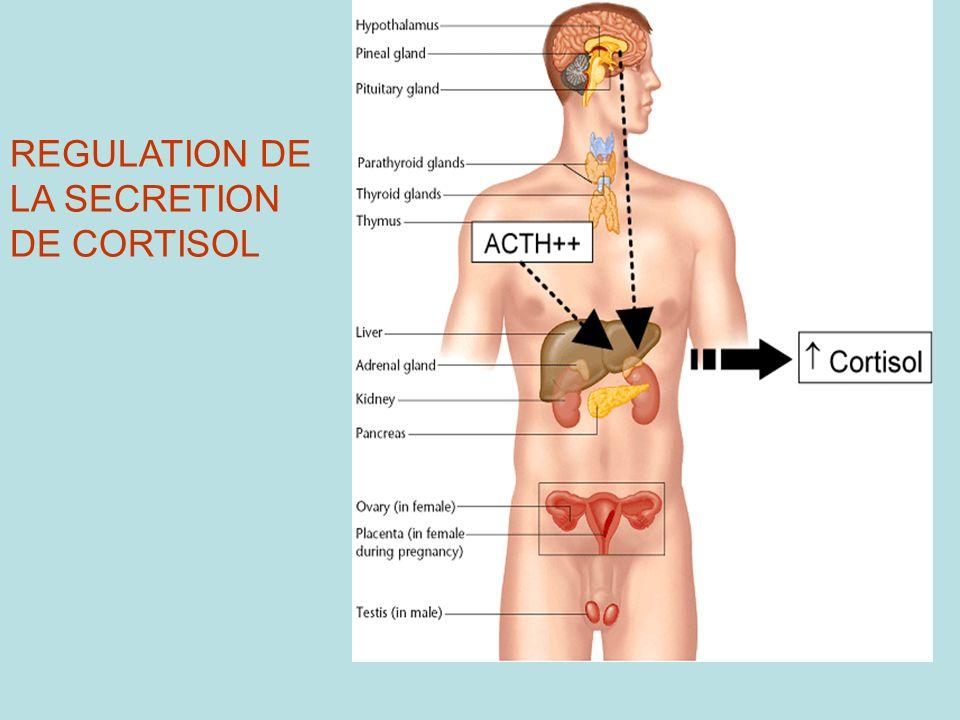 REGULATION DE LA SECRETION DE CORTISOL