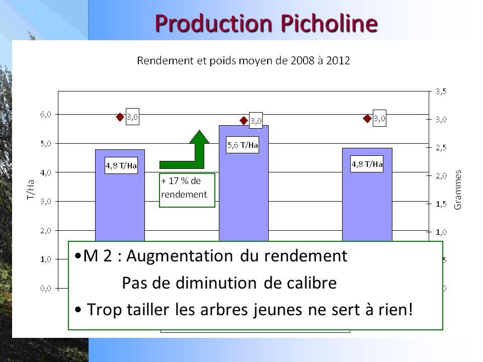 Production Picholine M 2 : Augmentation du rendement Pas de diminution de calibre Trop tailler les arbres jeunes ne sert à rien!