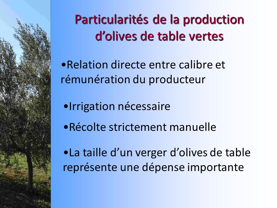 Relation directe entre calibre et rémunération du producteur Particularitésde la production dolives de table vertes Particularités de la production do