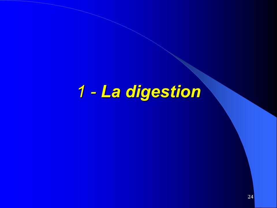 24 1 - La digestion