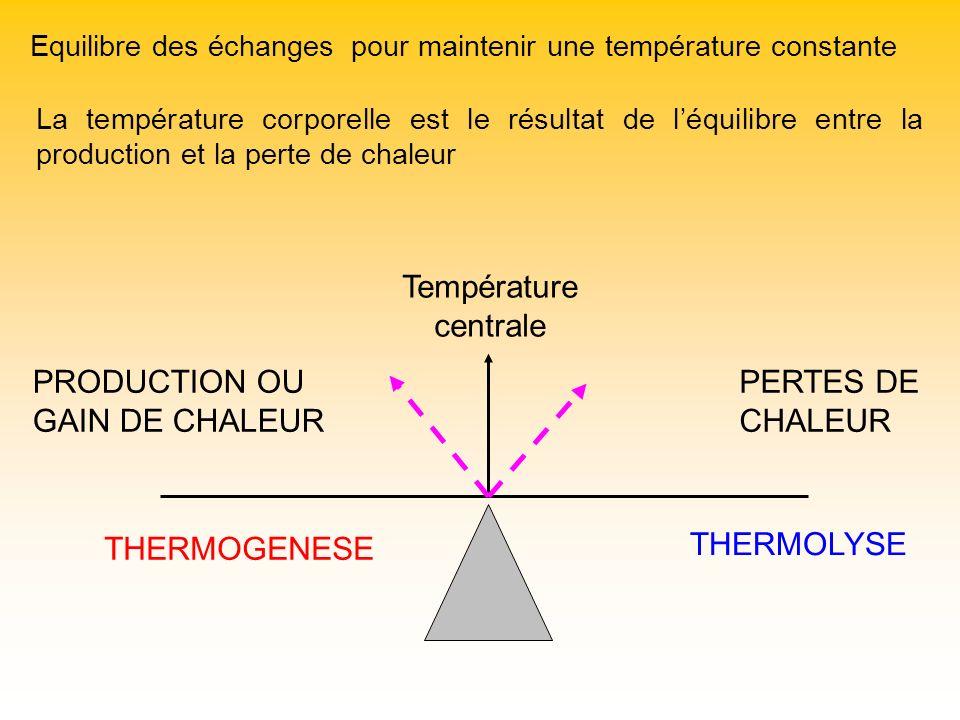 Equilibre des échanges pour maintenir une température constante PRODUCTION OU GAIN DE CHALEUR PERTES DE CHALEUR Température centrale THERMOGENESE THER