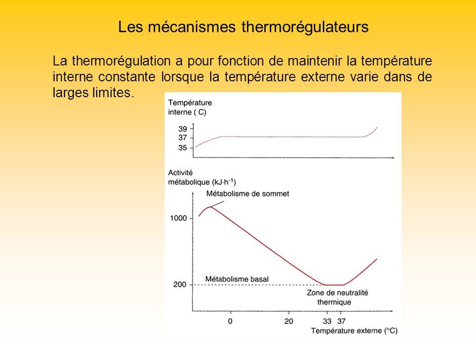 Les mécanismes thermorégulateurs La thermorégulation a pour fonction de maintenir la température interne constante lorsque la température externe vari