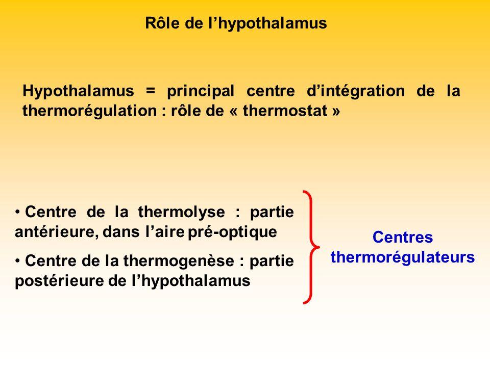 Rôle de lhypothalamus Hypothalamus = principal centre dintégration de la thermorégulation : rôle de « thermostat » Centre de la thermolyse : partie an