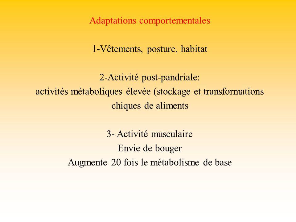 Adaptations comportementales 1-Vêtements, posture, habitat 2-Activité post-pandriale: activités métaboliques élevée (stockage et transformations chiqu