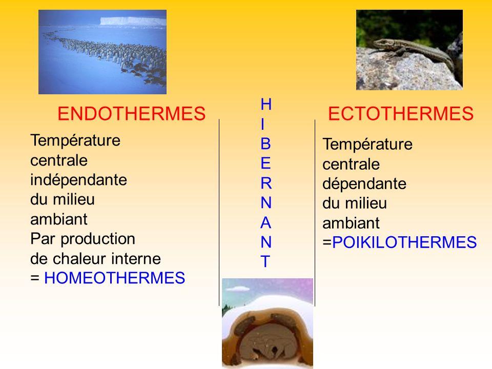 ENDOTHERMESECTOTHERMES HIBERNANTHIBERNANT Température centrale indépendante du milieu ambiant Par production de chaleur interne = HOMEOTHERMES Tempéra