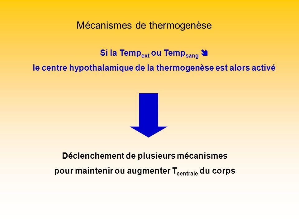 Mécanismes de thermogenèse Si la Temp ext ou Temp sang le centre hypothalamique de la thermogenèse est alors activé Déclenchement de plusieurs mécanis