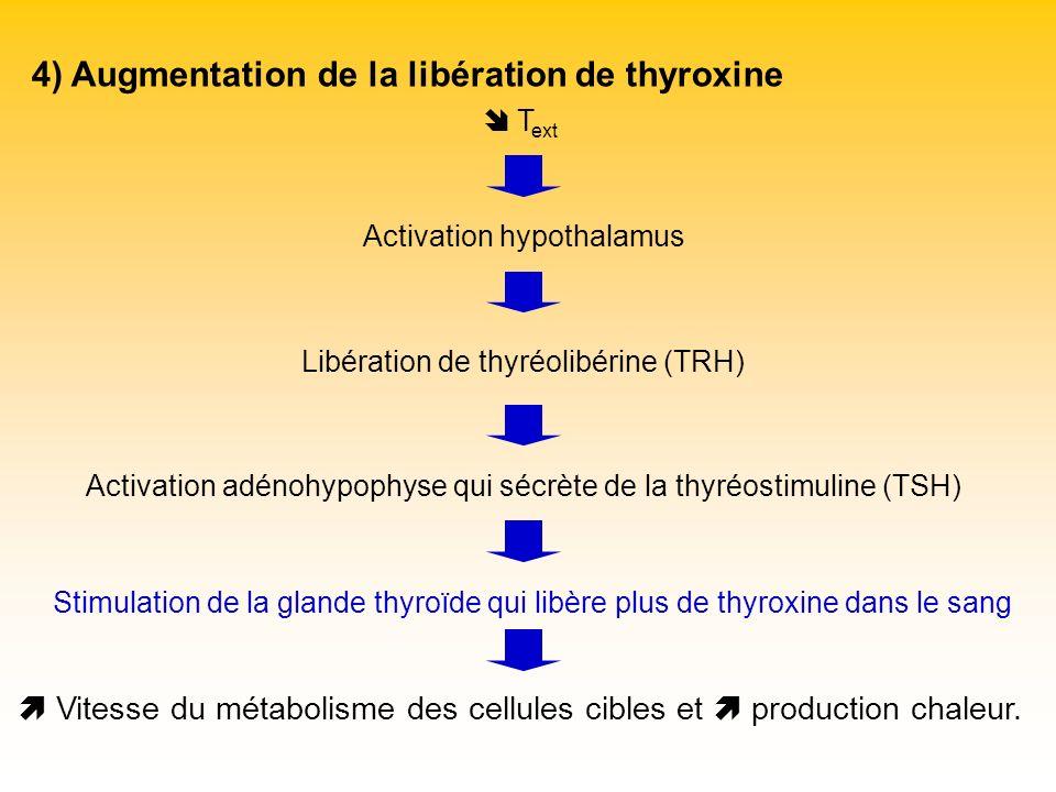 4) Augmentation de la libération de thyroxine T ext Activation hypothalamus Libération de thyréolibérine (TRH) Stimulation de la glande thyroïde qui l