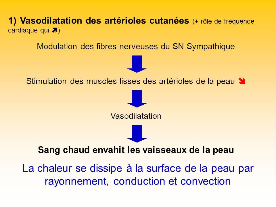 1) Vasodilatation des artérioles cutanées (+ rôle de fréquence cardiaque qui ) Modulation des fibres nerveuses du SN Sympathique Stimulation des muscl