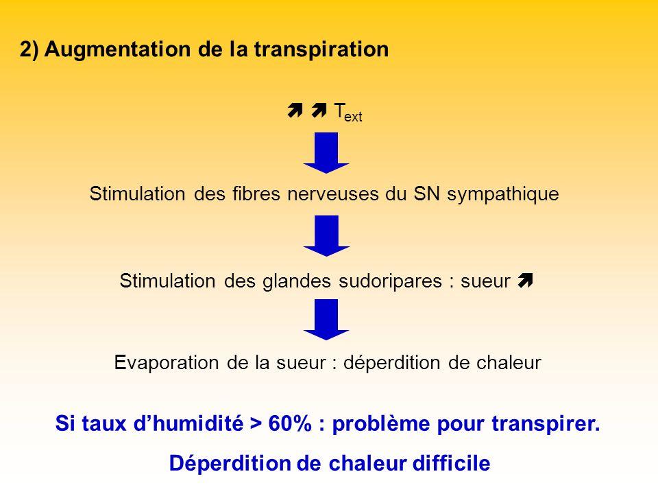 2) Augmentation de la transpiration T ext Stimulation des fibres nerveuses du SN sympathique Stimulation des glandes sudoripares : sueur Evaporation d