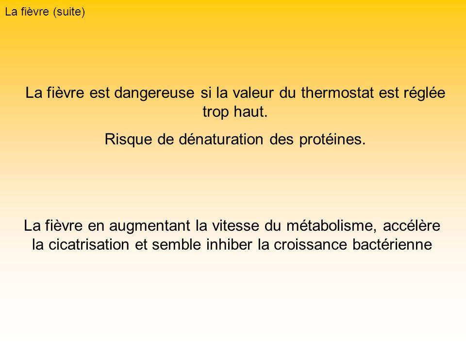 La fièvre (suite) La fièvre est dangereuse si la valeur du thermostat est réglée trop haut. Risque de dénaturation des protéines. La fièvre en augment