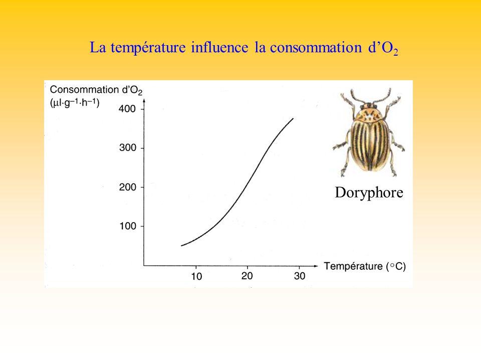 La température influence la consommation dO 2 Doryphore