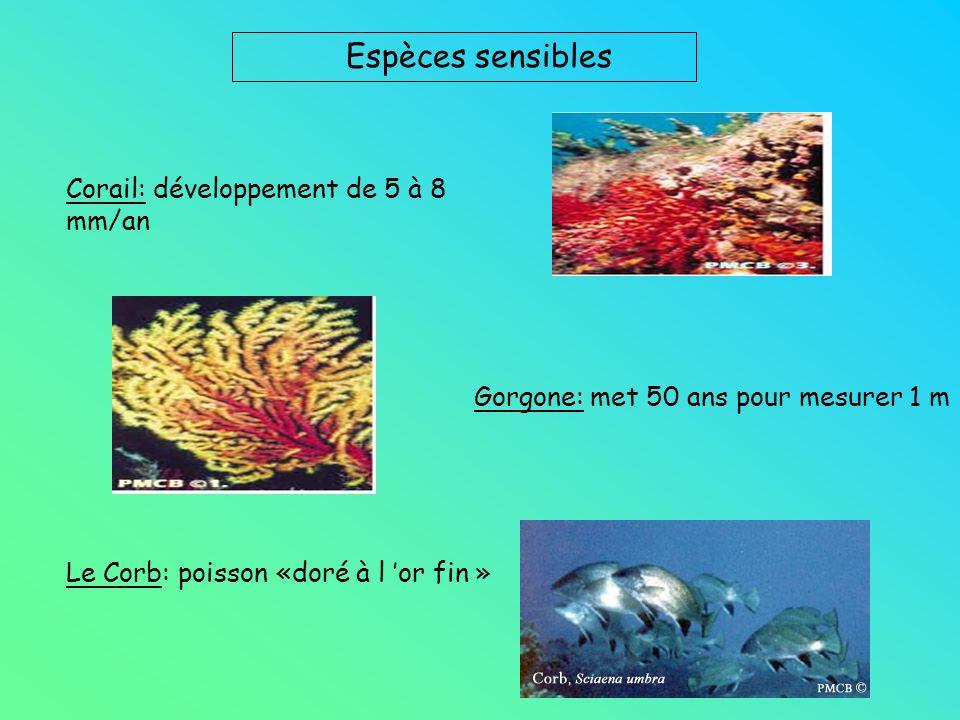 Espèces sensibles Corail: développement de 5 à 8 mm/an Gorgone: met 50 ans pour mesurer 1 m Le Corb: poisson «doré à l or fin »