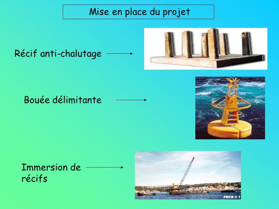 Récif anti-chalutage Mise en place du projet Bouée délimitante Immersion de récifs