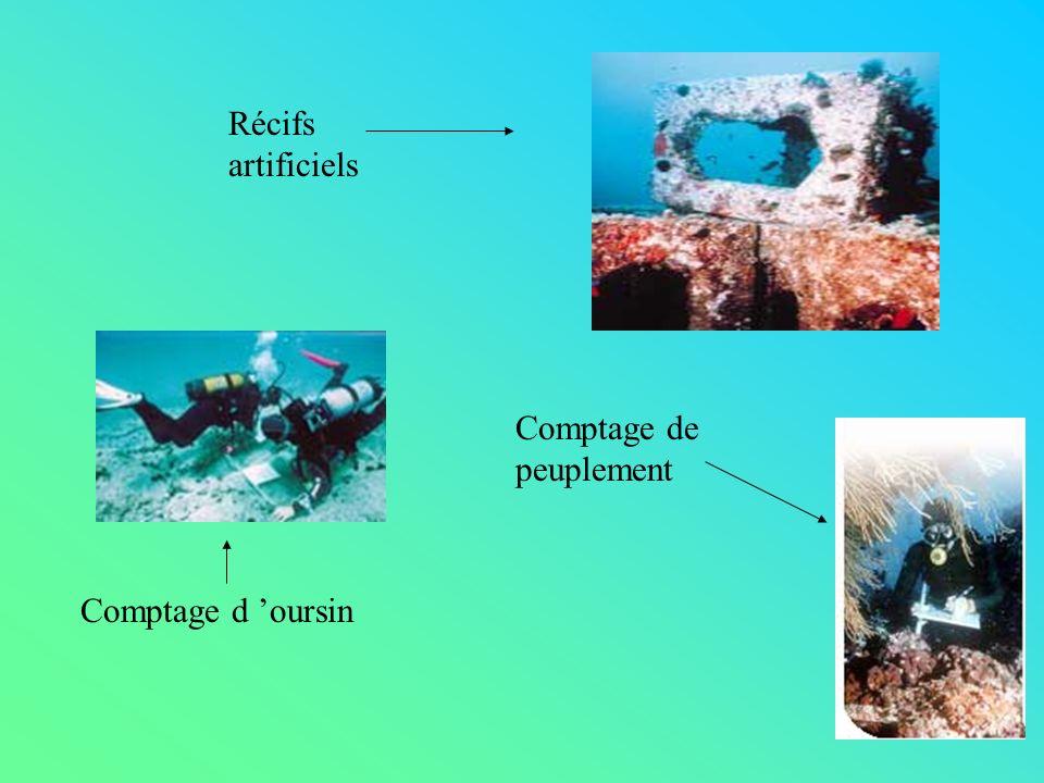 Récifs artificiels Comptage d oursin Comptage de peuplement