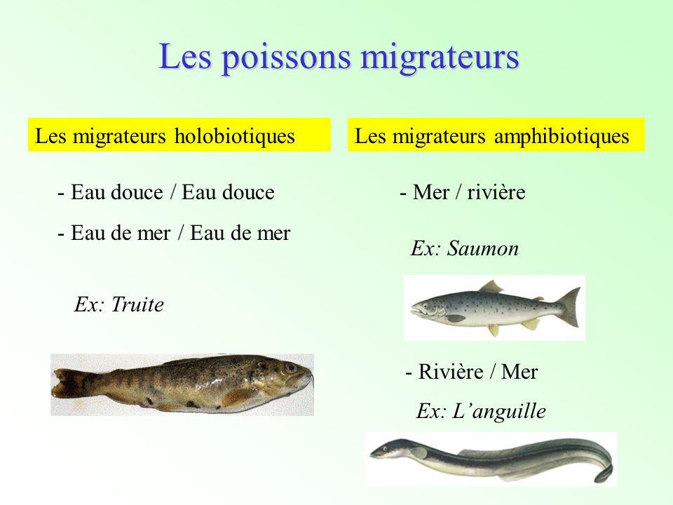Les poissons migrateurs Les migrateurs holobiotiques - Eau douce / Eau douce - Eau de mer / Eau de mer Ex: Truite Les migrateurs amphibiotiques - Mer