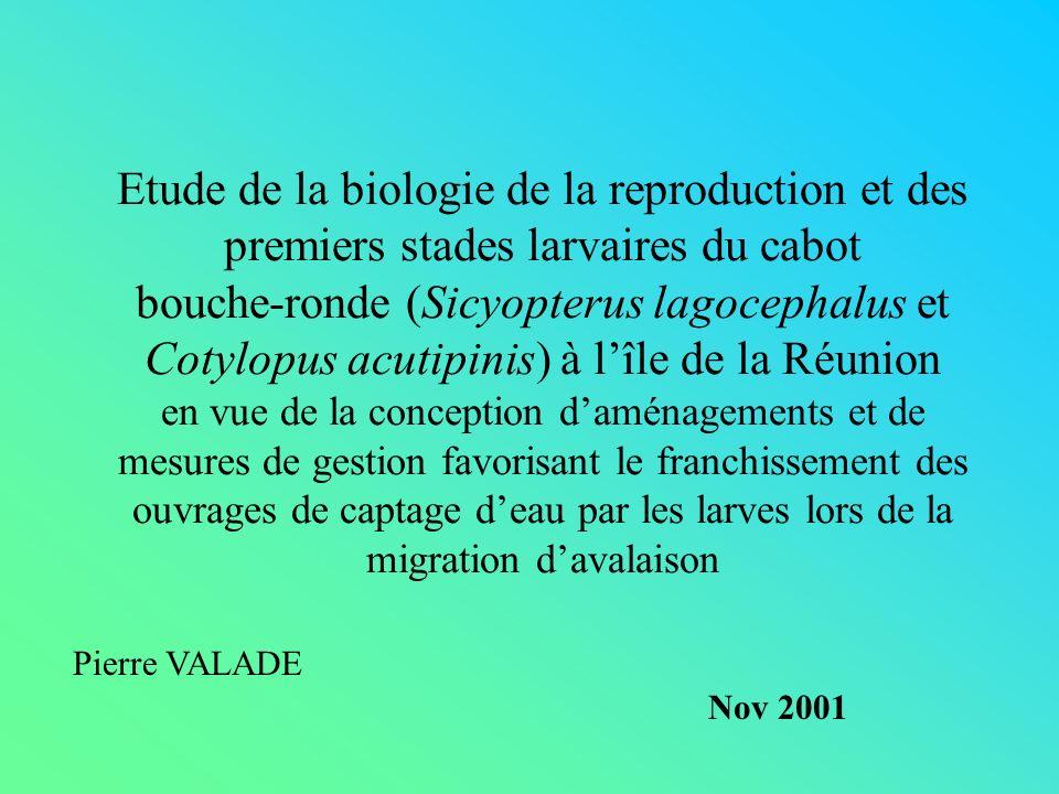 Etude de la biologie de la reproduction et des premiers stades larvaires du cabot bouche-ronde (Sicyopterus lagocephalus et Cotylopus acutipinis) à lî
