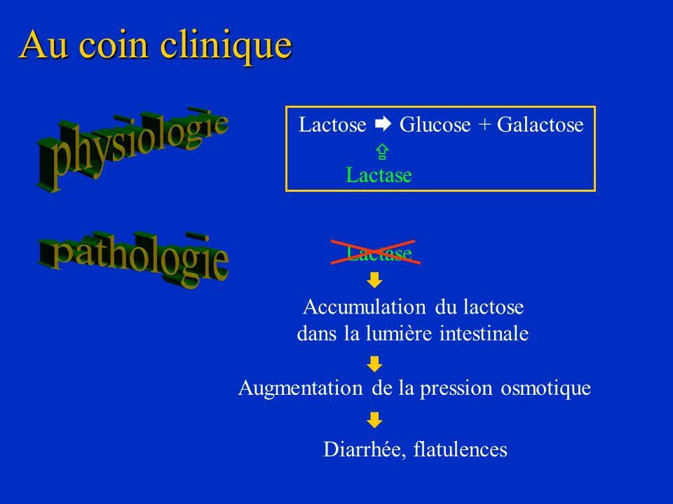 Au coin clinique Lactose Glucose + Galactose Lactase Accumulation du lactose dans la lumière intestinale Augmentation de la pression osmotique Diarrhé