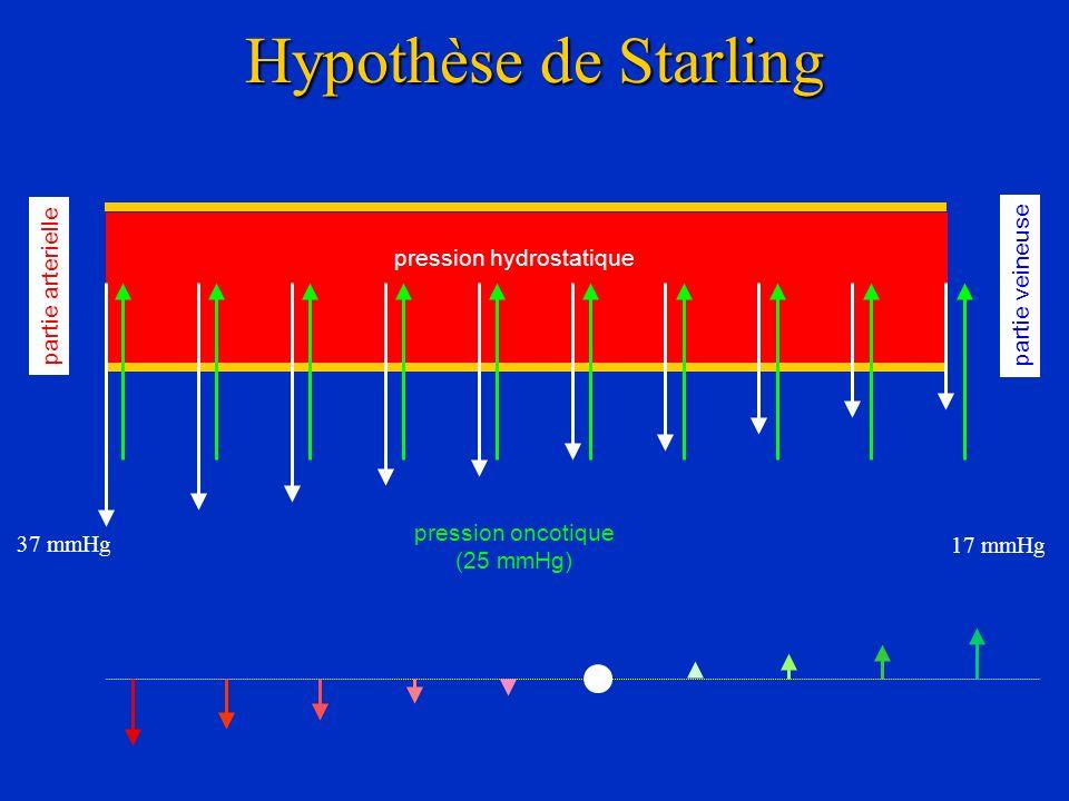 Hypothèse de Starling partie arterielle partie veineuse pression hydrostatique 37 mmHg 17 mmHg pression oncotique (25 mmHg)
