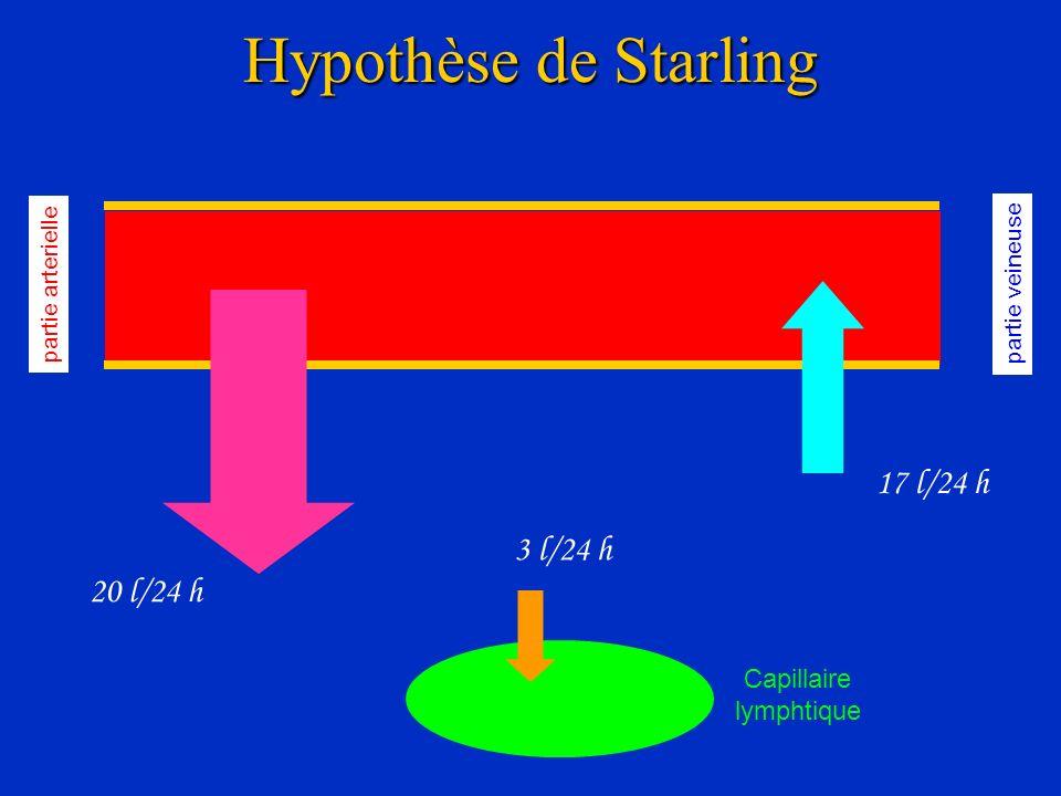 Hypothèse de Starling partie arterielle partie veineuse 20 l/24 h 17 l/24 h 3 l/24 h Capillaire lymphtique