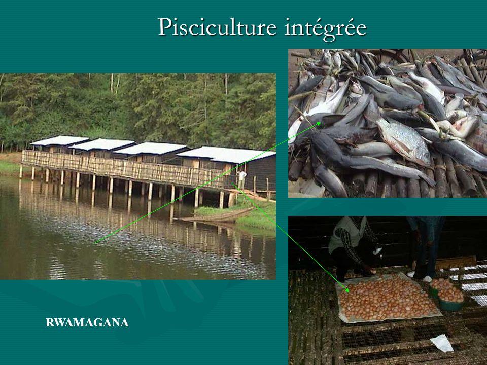 Pisciculture intégrée RWAMAGANA