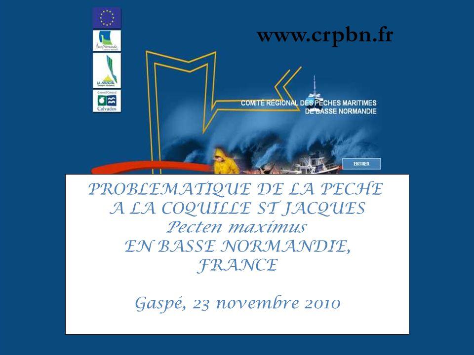 www.crpbn.fr PROBLEMATIQUE DE LA PECHE A LA COQUILLE ST JACQUES Pecten maximus EN BASSE NORMANDIE, FRANCE Gaspé, 23 novembre 2010