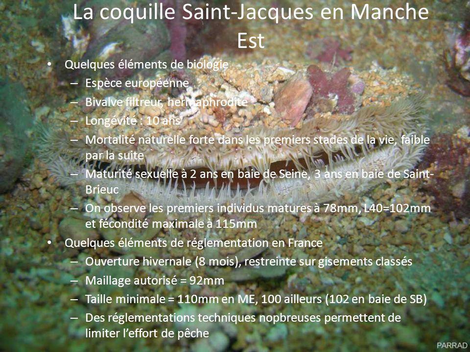 La coquille Saint-Jacques en Manche Est Quelques éléments de biologie – Espèce européenne – Bivalve filtreur, hermaphrodite – Longévité : 10 ans – Mor