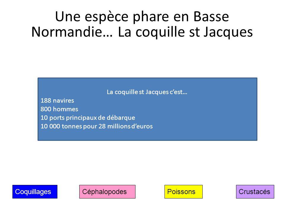 Coquillages Céphalopodes CrustacésPoissons Une espèce phare en Basse Normandie… La coquille st Jacques La coquille st Jacques cest… 188 navires 800 ho