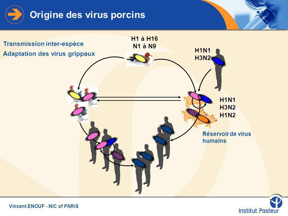 Vincent ENOUF - NIC of PARIS Origine des virus porcins H1N1 H3N2 H1N1 H3N2 H1N2 H1 à H16 N1 à N9 Transmission inter-espèce Adaptation des virus grippaux Réservoir de virus humains