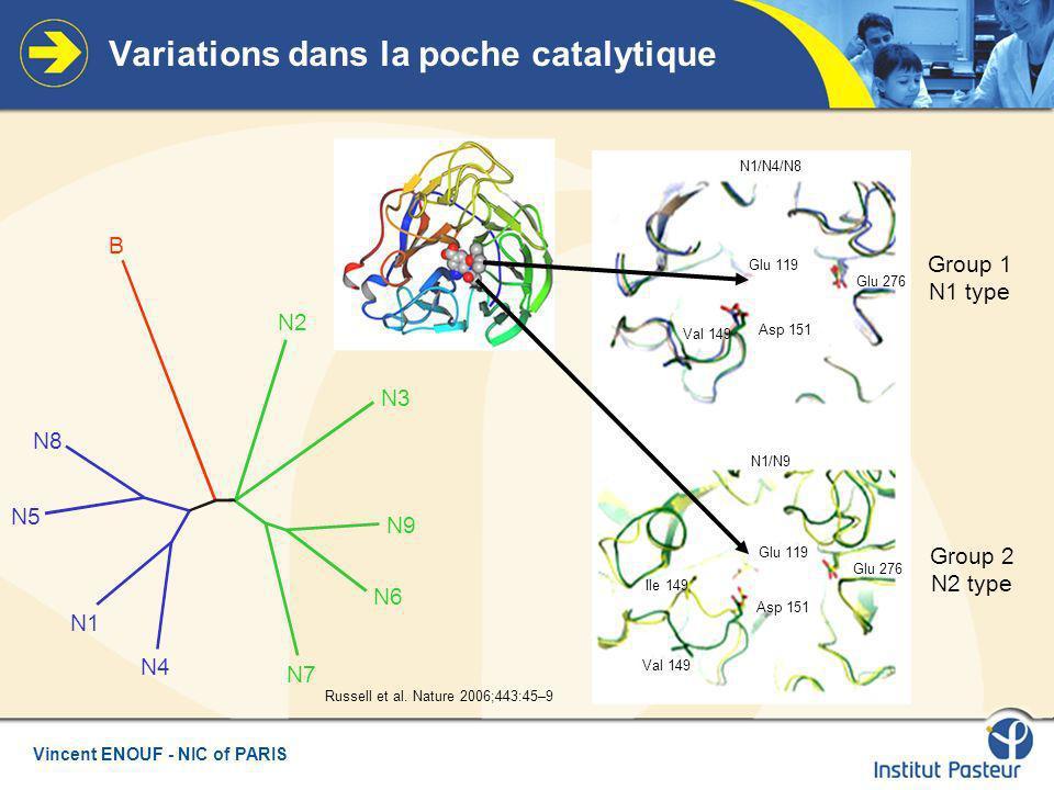 Vincent ENOUF - NIC of PARIS Variations dans la poche catalytique Group 1 N1 type Group 2 N2 type Russell et al.