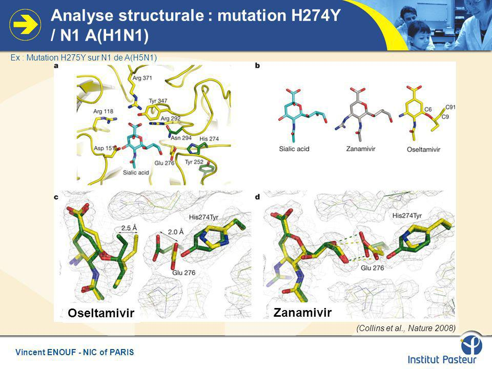 Vincent ENOUF - NIC of PARIS Analyse structurale : mutation H274Y / N1 A(H1N1) (Collins et al., Nature 2008) Oseltamivir Zanamivir Ex : Mutation H275Y