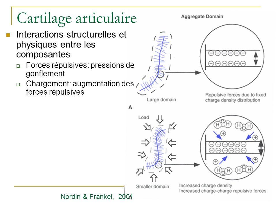 Cartilage articulaire Interactions structurelles et physiques entre les composantes Forces répulsives: pressions de gonflement Chargement: augmentatio