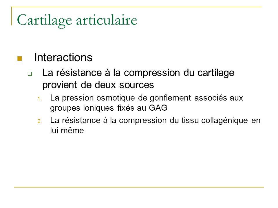 Cartilage articulaire Interactions La résistance à la compression du cartilage provient de deux sources 1. La pression osmotique de gonflement associé