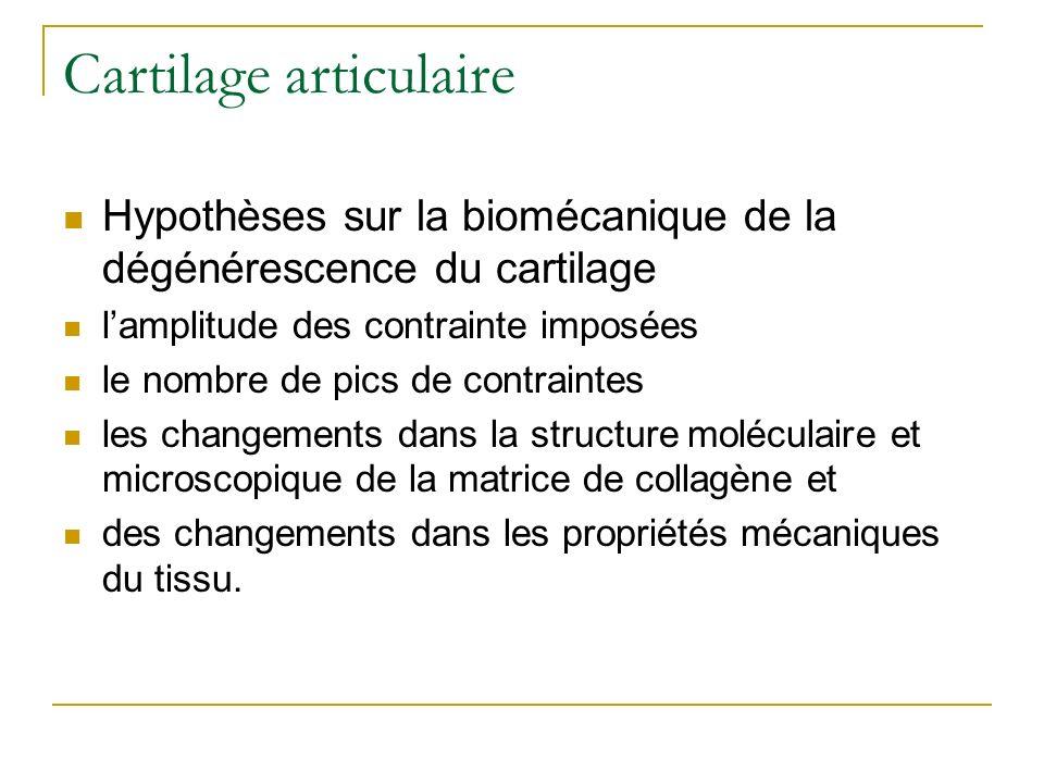 Cartilage articulaire Hypothèses sur la biomécanique de la dégénérescence du cartilage lamplitude des contrainte imposées le nombre de pics de contrai
