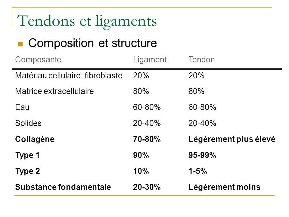 Tendons et ligaments Composition et structure ComposanteLigamentTendon Matériau cellulaire: fibroblaste20% Matrice extracellulaire80% Eau60-80% Solide