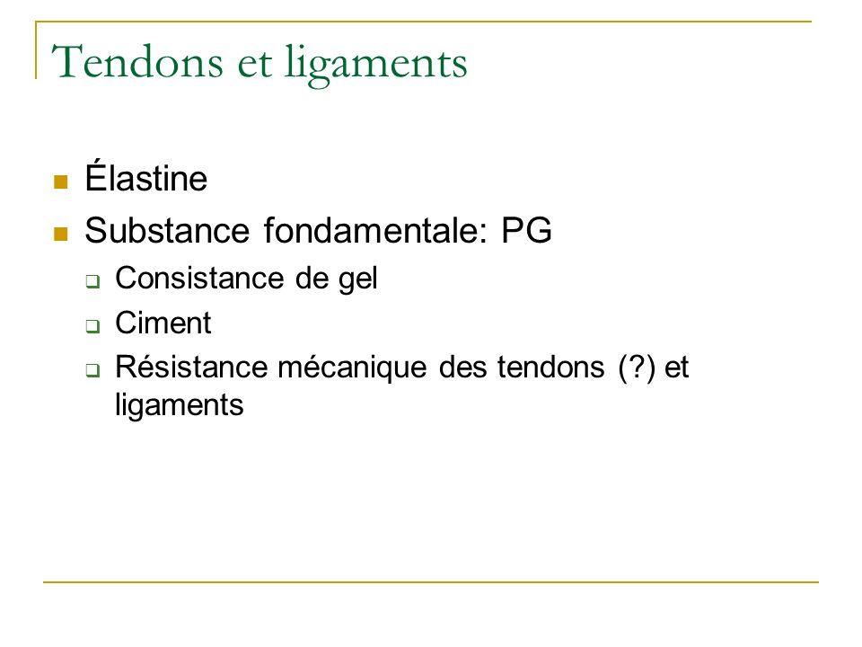 Tendons et ligaments Élastine Substance fondamentale: PG Consistance de gel Ciment Résistance mécanique des tendons (?) et ligaments