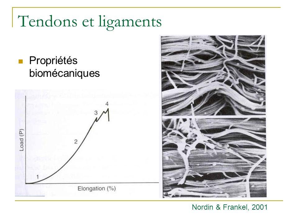 Tendons et ligaments Propriétés biomécaniques Nordin & Frankel, 2001