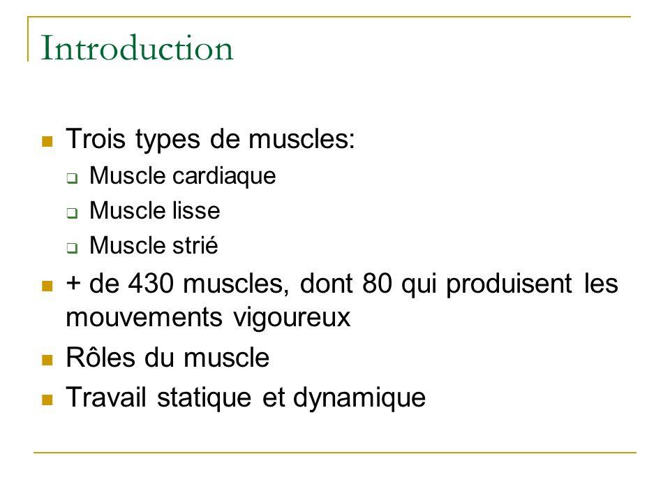 Introduction Trois types de muscles: Muscle cardiaque Muscle lisse Muscle strié + de 430 muscles, dont 80 qui produisent les mouvements vigoureux Rôle