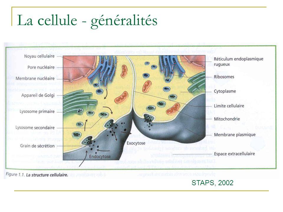 La cellule - généralités STAPS, 2002