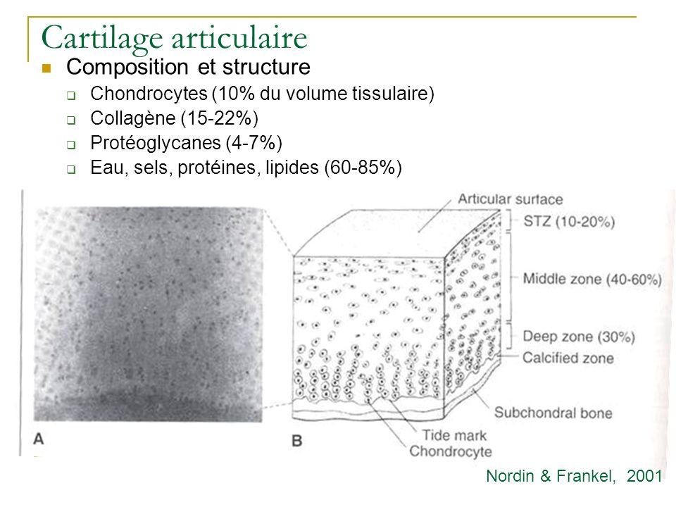 Cartilage articulaire Composition et structure Chondrocytes (10% du volume tissulaire) Collagène (15-22%) Protéoglycanes (4-7%) Eau, sels, protéines,