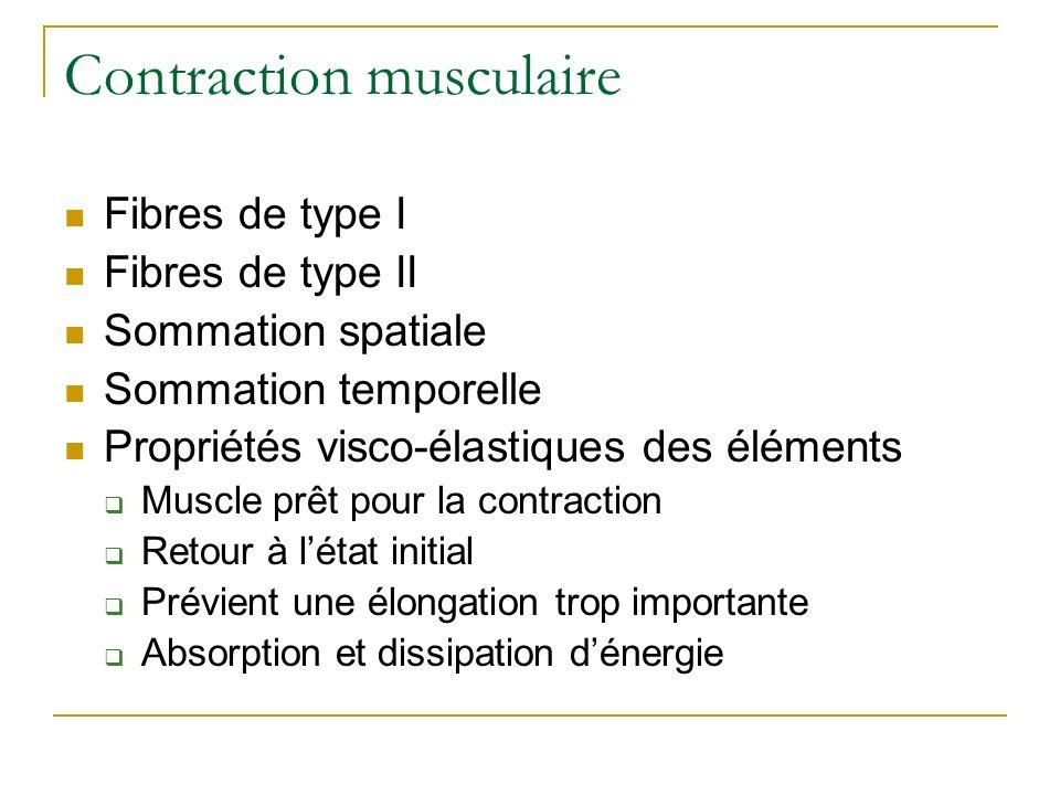 Contraction musculaire Fibres de type I Fibres de type II Sommation spatiale Sommation temporelle Propriétés visco-élastiques des éléments Muscle prêt
