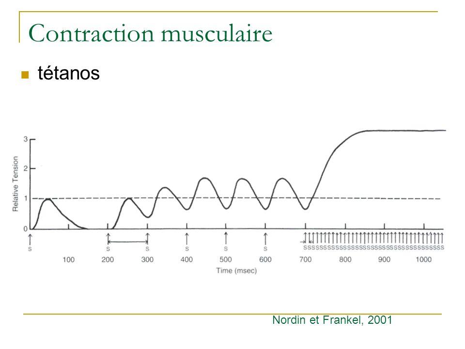 Contraction musculaire tétanos Nordin et Frankel, 2001