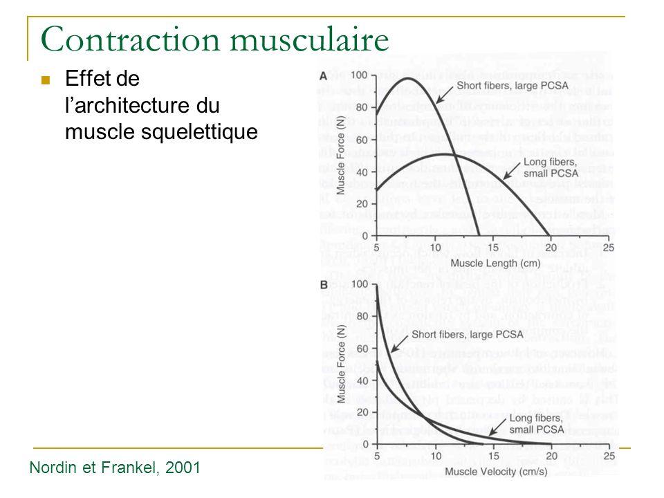 Contraction musculaire Effet de larchitecture du muscle squelettique Nordin et Frankel, 2001