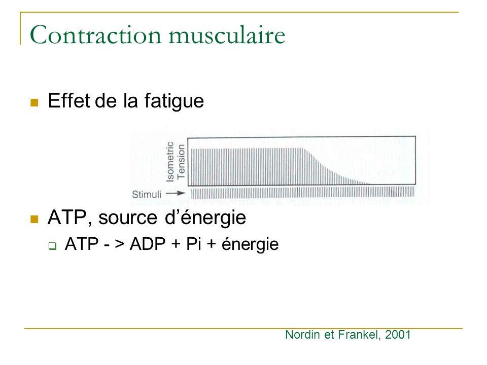 Contraction musculaire Effet de la fatigue ATP, source dénergie ATP - > ADP + Pi + énergie Nordin et Frankel, 2001