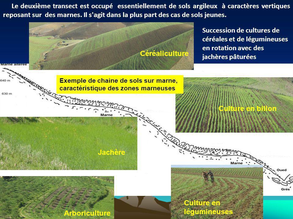 Céréaliculture Jachère Culture en légumineuses Culture en billon Arboriculture Succession de cultures de céréales et de légumineuses en rotation avec