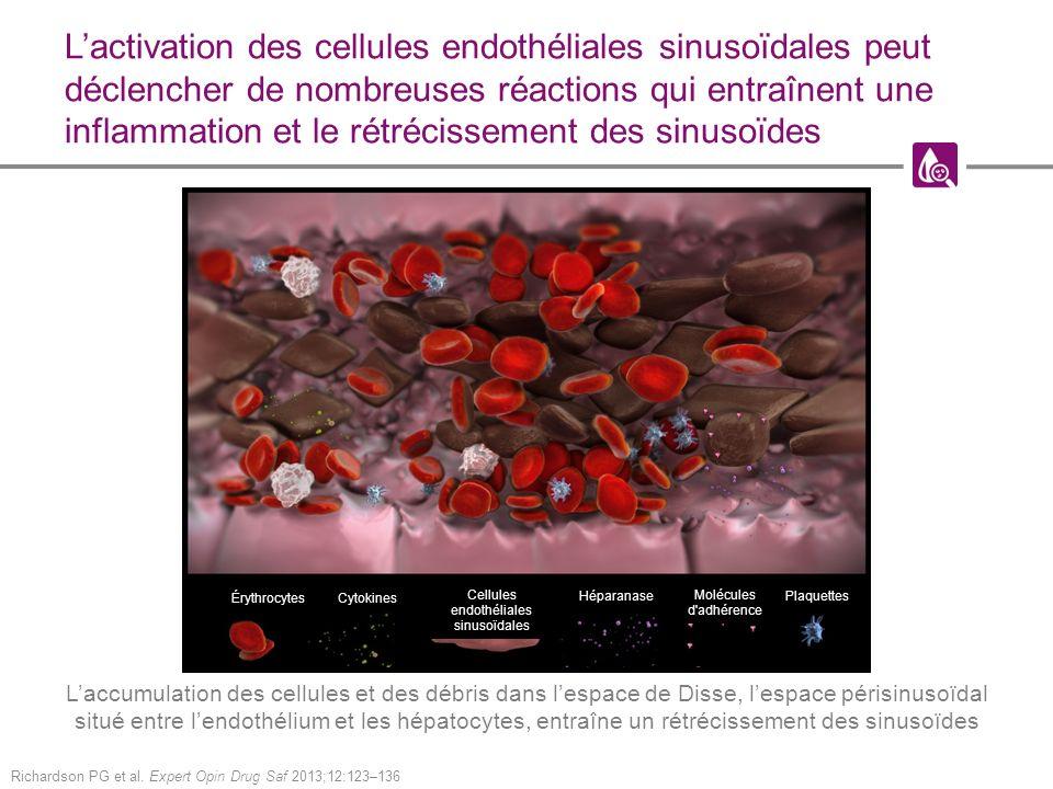 Lactivation des cellules endothéliales sinusoïdales peut déclencher de nombreuses réactions qui entraînent une inflammation et le rétrécissement des sinusoïdes Richardson PG et al.