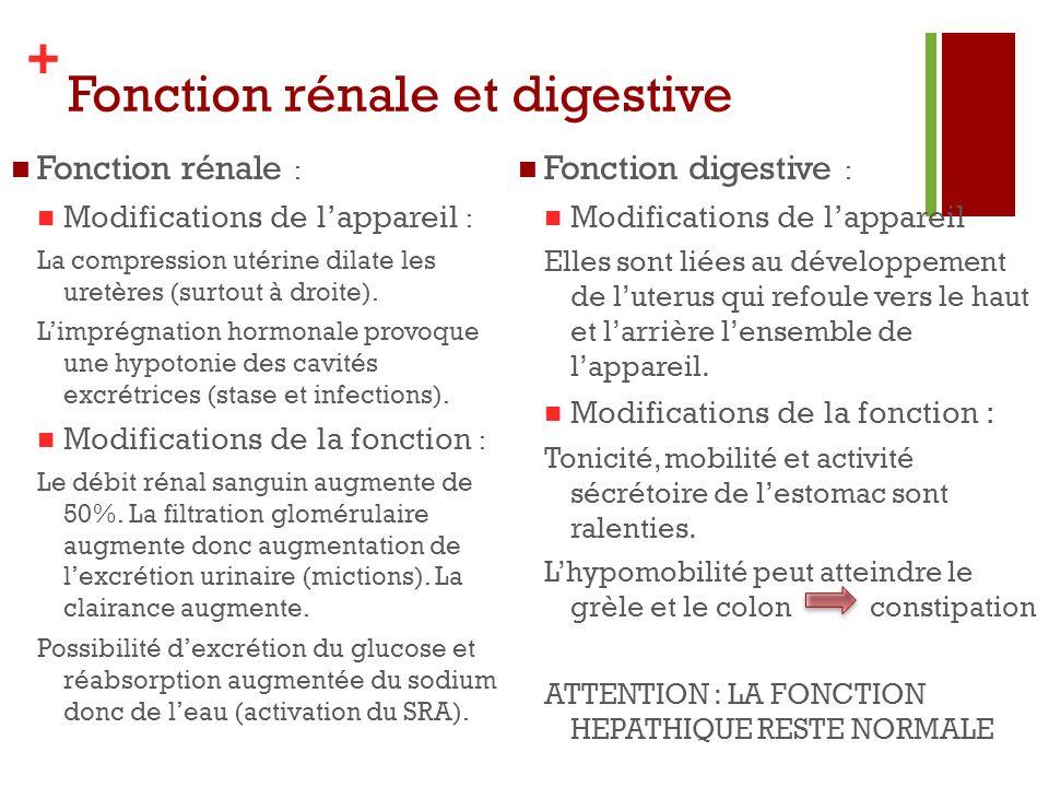 + Fonction rénale et digestive Fonction rénale : Modifications de lappareil : La compression utérine dilate les uretères (surtout à droite). Limprégna
