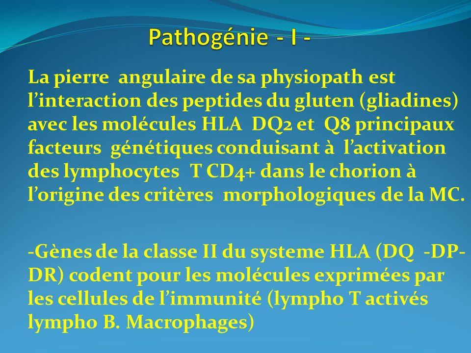 La pierre angulaire de sa physiopath est linteraction des peptides du gluten (gliadines) avec les molécules HLA DQ2 et Q8 principaux facteurs génétiqu