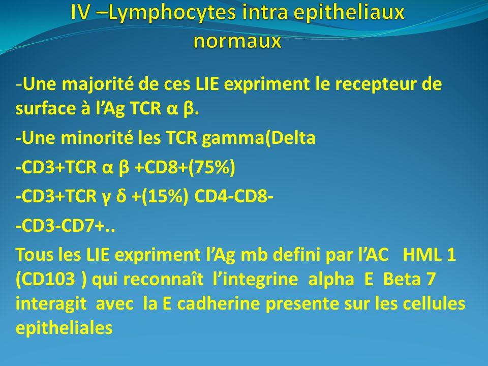 -Une majorité de ces LIE expriment le recepteur de surface à lAg TCR α β. -Une minorité les TCR gamma(Delta -CD3+TCR α β +CD8+(75%) -CD3+TCR γ δ +(15%